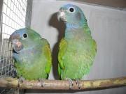 1,1 2010 mláďata